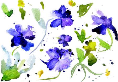 disegni a matita: Acquerello fiori blu su sfondo bianco
