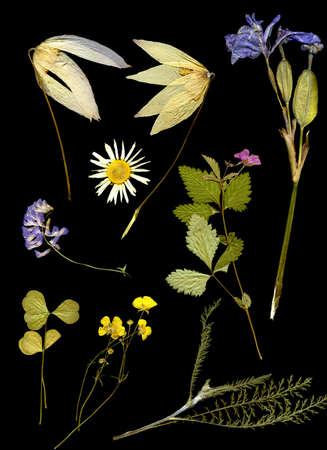 herbarium on a black background