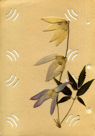 old photo album: old photo album and dried flower on white background