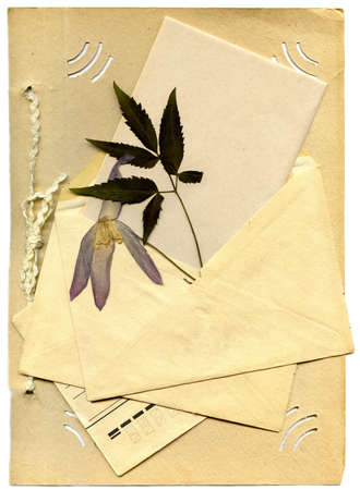 old envelope and the dried-up flower on paper isolated on a white background photo