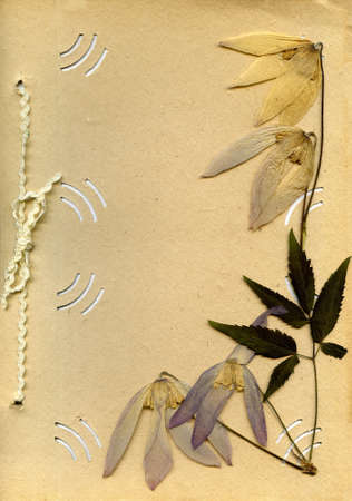 old photo album: old photo album and dried flower as background for text
