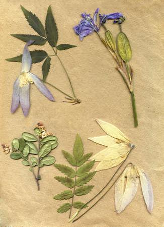 flores secas: fondo herbario de la vendimia en el papel viejo