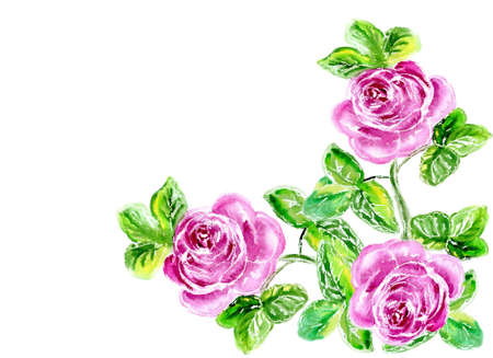 Watercolor three roses on a white background for text photo