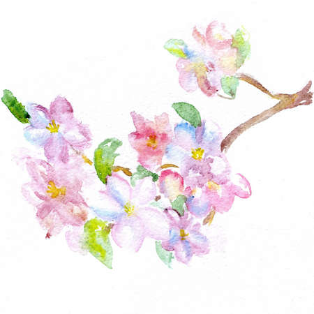 watercolor a branch of a blossoming apple-tree photo