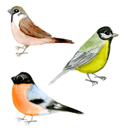 redbreast: set of watercolor drawing birds, bullfinch, titmouse,  sparrow  at white background, hand drawn