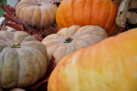 Autumn display of orange pumpkins close up 写真素材