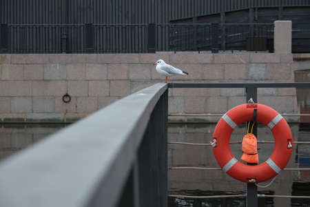 White Seagull sitting on the parapet next to the lifeline Stockfoto - 132580543