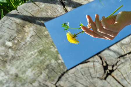 The female hand is holding a flower in the mirror. Stockfoto - 149349641
