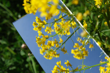 abstraction. the mirror displays the sky and yellow flowers