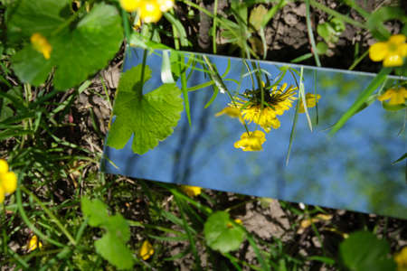 The mirror displays the sky and yellow flowers
