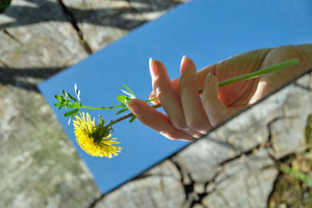 abstraction. The female hand is holding a flower in the mirror. In the background is a wood texture. Nature, close-up. photo for screensaver. High quality photo photo for the screensaver. aesthetics Stockfoto