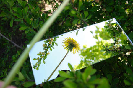 Mirror displays the sky and yellow flowers Stockfoto - 149350675