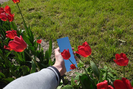 abstraction. in the mirror are male hands, a red tulip, the sky. green nature around. close-up Stockfoto