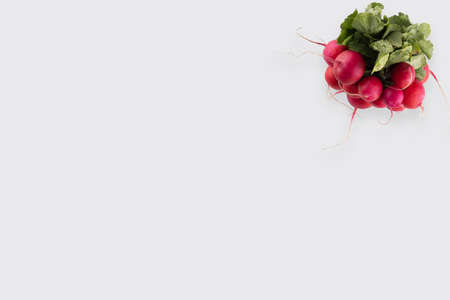 Small garden radish isolated on white background