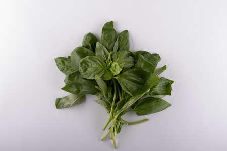 Fresh basil leaf isolated on white background, close up. Basil herb