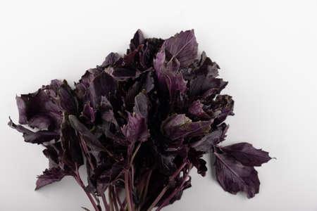 Fresh garden herbs. Purple basil. Isolated on white background Stockfoto