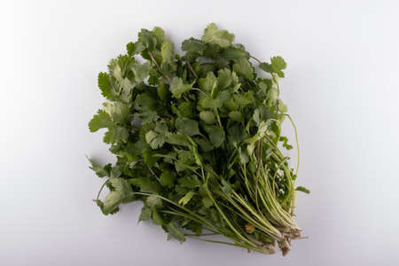 a bunch of fresh fragrant cilantro she is a caryander closeup on a white background Stockfoto