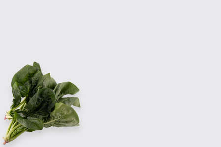 green leaves of spinach isolated on white background Stockfoto - 149397856