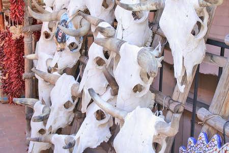 Cattle skulls on rack in Santa Fe  photo