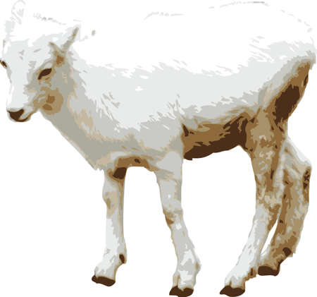 baby goat: Vector illustration of a baby goat or kid