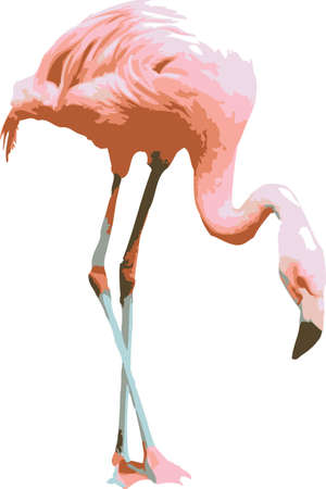 pink flamingo: Vector illustration of a pink flamingo on white