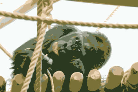Vector illustration of a gorilla in the zoo Stock Illustration - 4670022