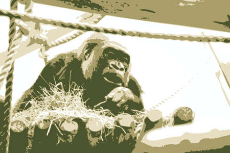 Vector illustration of a gorilla in a zoo Stock Illustration - 4670034
