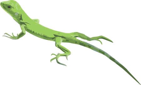 Vector illustratie van een groene leguanen op wit Stockfoto
