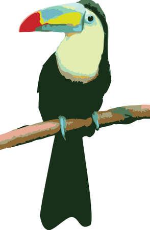 Vector illustratie van een kleurrijke papegaai op witte achtergrond Stockfoto