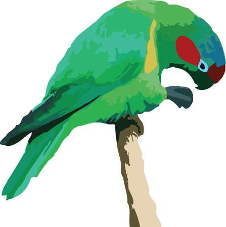 Vector illustratie van een kleurrijke papegaai op wit Stockfoto - 4670028