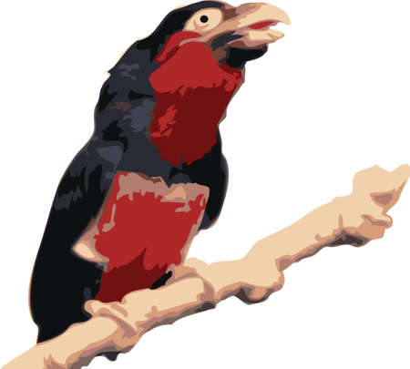 Vector illustration of a colorfull tropical bird illustration