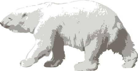 poles: Vector illustration of a polar bear on white background