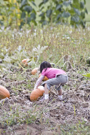 A young girl picking pumpkins in a Pumpkin patch photo