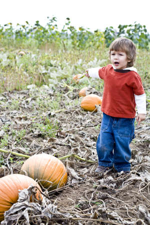 A young child playing in a Pumpkin patch photo