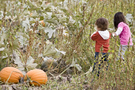 Two young children playing in a Pumpkin patch Stock Photo - 5353074