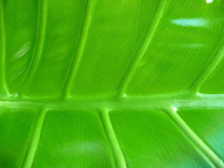 Tropical leaf underside background Banco de Imagens