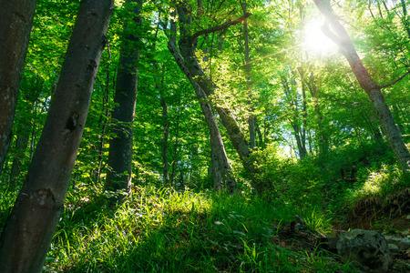 green forest, spring landscape