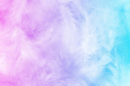 Close up photo of fluffy feathers pile. Sweet pastel colorful background with pink to blue gradient. Light, serenity, purity, clarity. 写真素材
