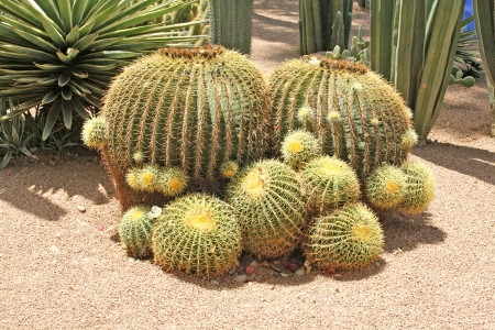 Close-up of a prickly cactus, exotic plants photo