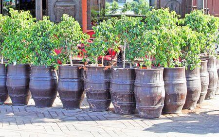 Seedlings of trees in pots Stock Photo - 15089812