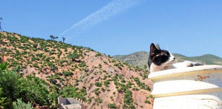 Mountain landscape, cat foreground