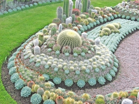 massif de fleurs: Cactus Flower Bed- Banque d'images
