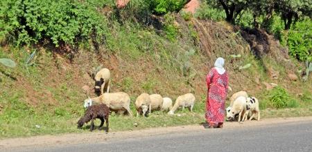 Woman shepherd herding sheeps Stock Photo