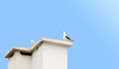 A seagull is sitting on the roof Stock Photo