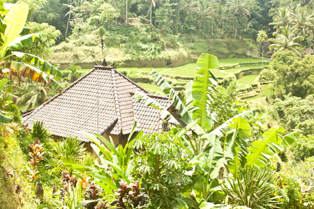 Tegallalang rice terraces (Bali, Indonesia)
