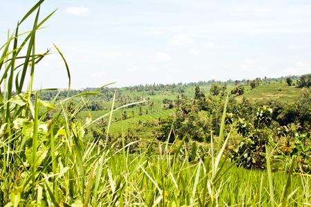ジャティルウィの棚田 (バリ島、インドネシア)