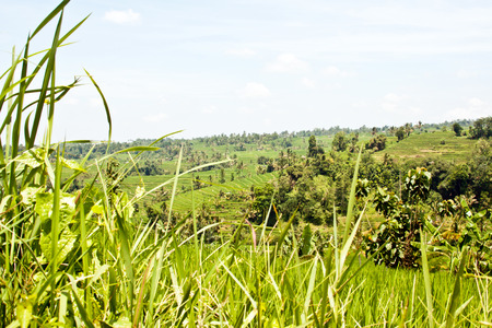 Jatiluwih rice terraces (Bali, Indonesia)