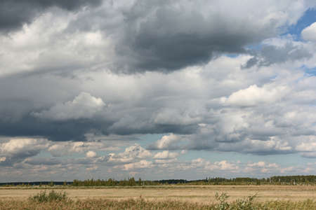 oat field: heavy clouds over wheat field