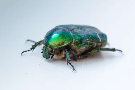 lays: green beetle lays on a white background