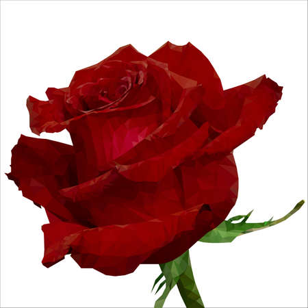 triangulation: red rose in the treated triangulation mode